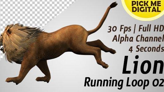 Lion boucle de course 02