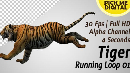 Thumbnail for Tiger Running Loop 01