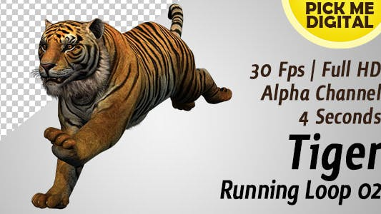 Thumbnail for Tiger Running Loop 02