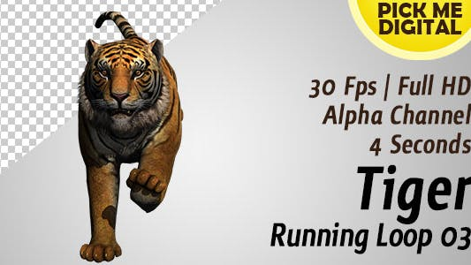 Thumbnail for Tiger Running Loop 03