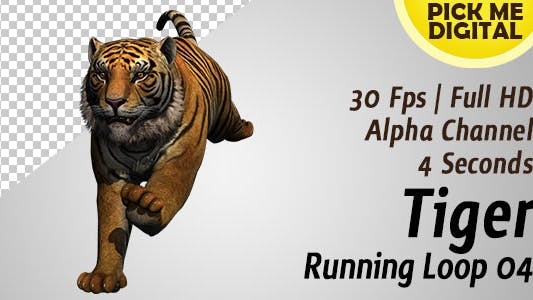 Thumbnail for Tiger Running Loop 04