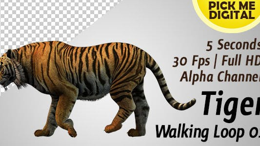 Cover Image for Tiger Walking Loop 01