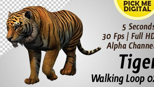 Thumbnail for Tiger Walking Loop 02