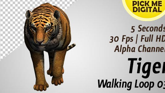 Thumbnail for Tiger Walking Loop 03