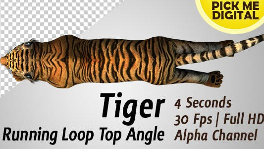 Thumbnail for Tiger Running Loop Top Angle
