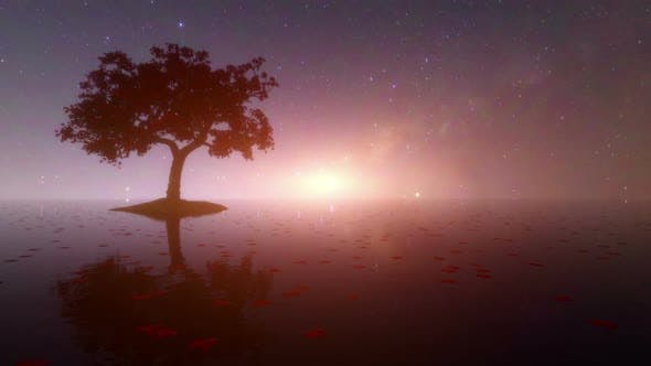 Thumbnail for Milky Way Rising With Reflection Of Trees