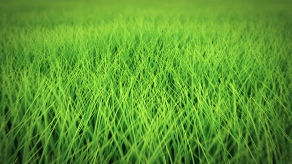 Thumbnail for Low Flight Over Grass, DOF, Seamless Loop