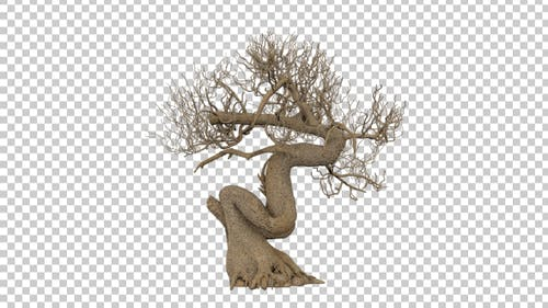 Toter Bonsai-Baum