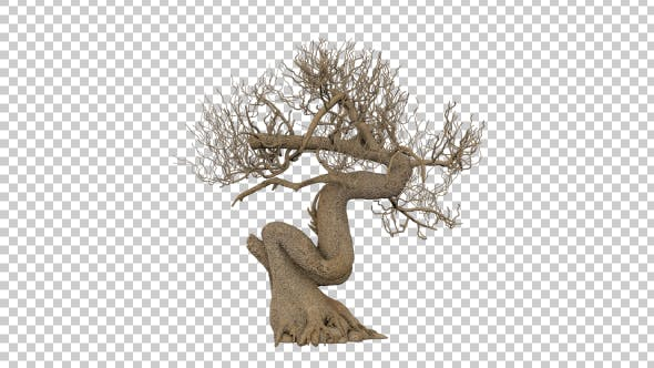Thumbnail for Dead Bonsai Tree