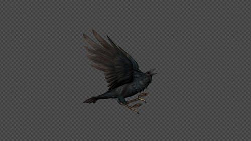 Crows Die Pack 8 IN 1