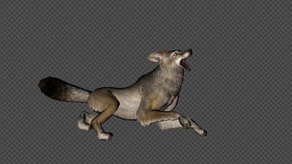 Thumbnail for Coyote Die Pack 4 In 1