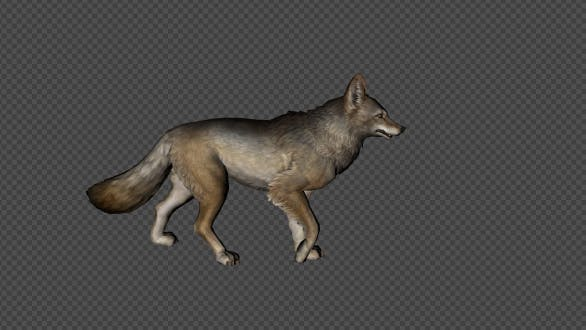 Thumbnail for Coyote Walk Pack  4 In 1