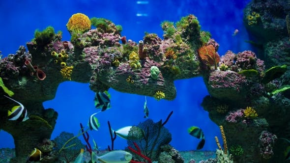 Thumbnail for Variety of Reef Fish