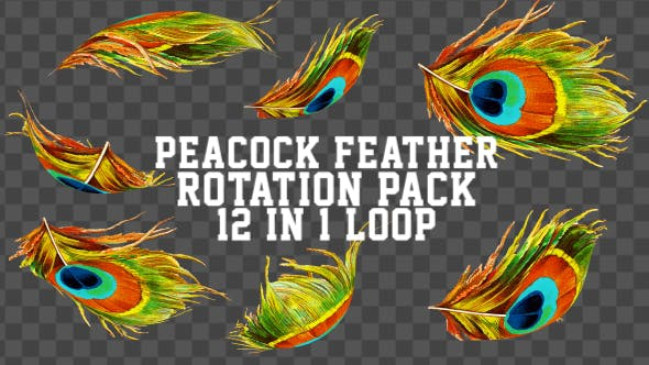 Peacock Feather Pack 11 in 1