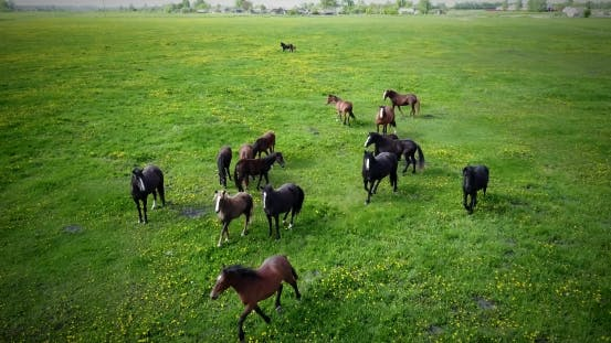 Thumbnail for A Herd of Horses Grazing on the Lawn