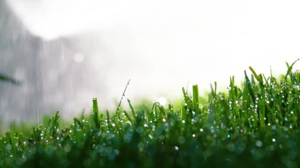 Thumbnail for Fresh Watered Grass in the Garden