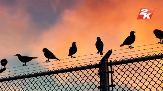 Thumbnail for Barbed Wire And Birds-2