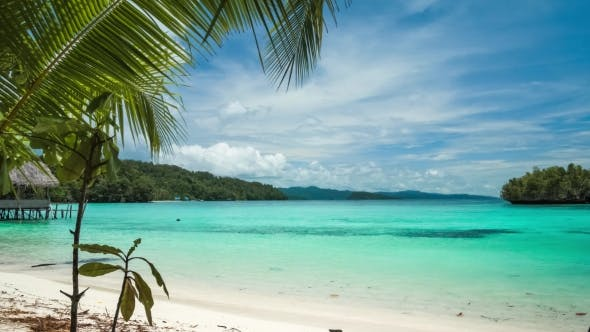 Beautiful Blue Lagoone with a Palmtree in Front, Gam Island, West Papuan, Raja Ampat, Indonesia