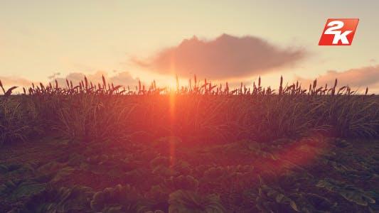 Thumbnail for Swamp Sunset