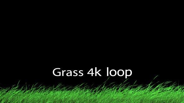 Thumbnail for Grass 1 Loop 4K