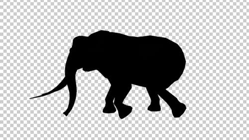 Elephant Walk Silhouette