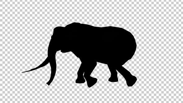 Thumbnail for Elephant Walk Silhouette