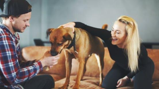 Thumbnail for Man Having Fun With Dog At Home