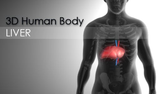 Thumbnail for 3d Human Body - Liver