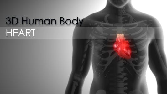 Thumbnail for 3d Human Body - Heart