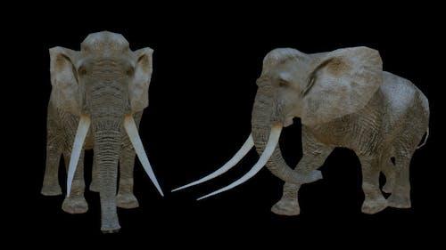 Realistic Elephants - 2 Scene