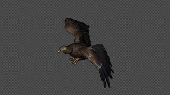 Thumbnail for Eagle Fly Walk Pack 4 In 1