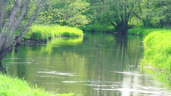 Thumbnail for Small River in the Spring in the Green Nature