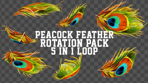 4K Peacock Feather Pack V1 5 in 1