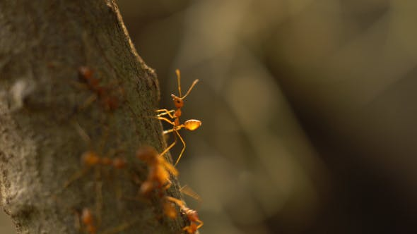 Ants Gather on a Tree