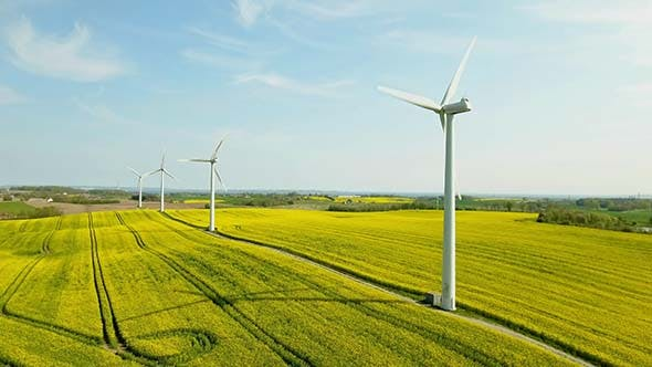 Cover Image for Turbine Farms Among The Yellow Flower Field