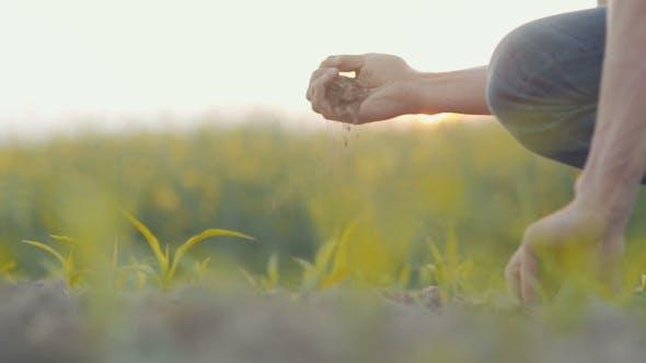 Thumbnail for Man Holding Fresh Soil in Hands