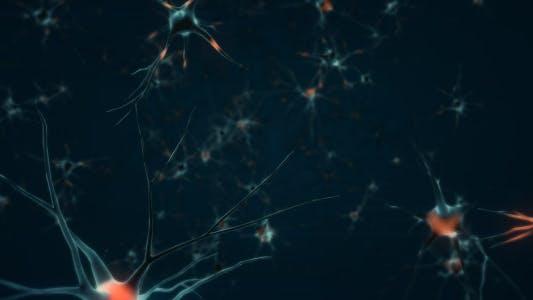 Thumbnail for Neurons