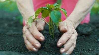 Woman Plants a Plant