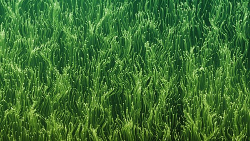Green Abstract Particles