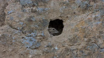 Small Gray Brown Bird and Little Birdhouse Nest in The Hole of The Rock Wall