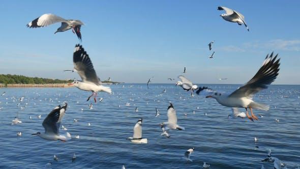 Thumbnail for Seagull Over Ocean