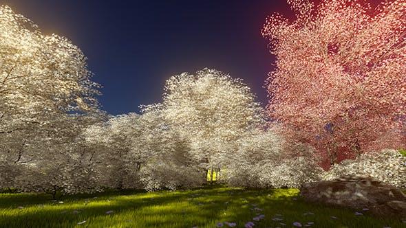Magic Blossoming Sakura