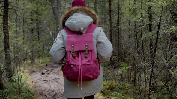 Thumbnail for A Girl in a Gray Park Is Walking Along a Trail in a Dense Pine Forest  .