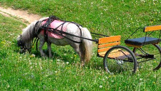 Thumbnail for Pony
