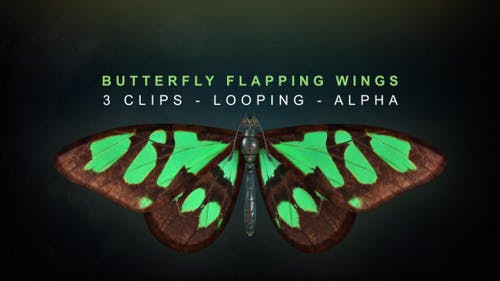 Butterfly Flapping Wings