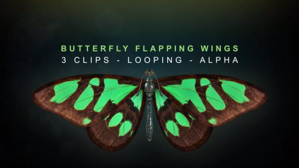 Thumbnail for Butterfly Flapping Wings