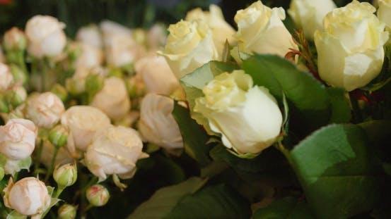 Thumbnail for White Roses in