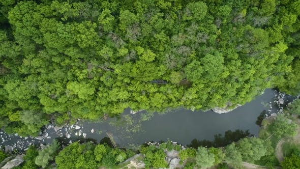 Thumbnail for Aerial Footage. Fly Over River in Forest. Top View