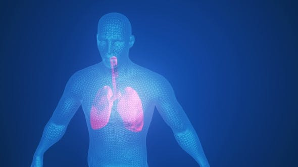 Thumbnail for 3d Animation of Pulsating Lungs in the Human Body