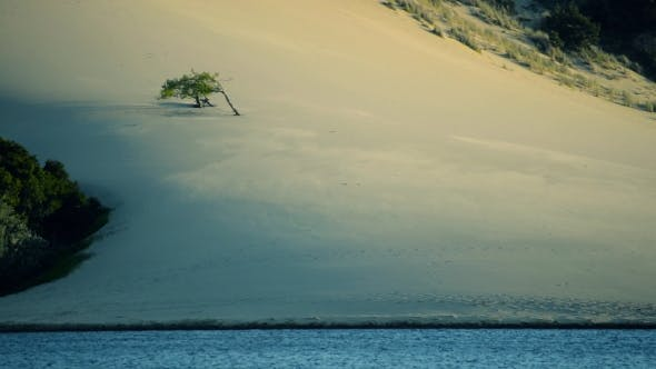 Thumbnail for Sand Blowing Across Dunes with Single Tree and Water